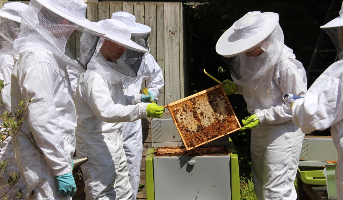 wycliffe college bee club