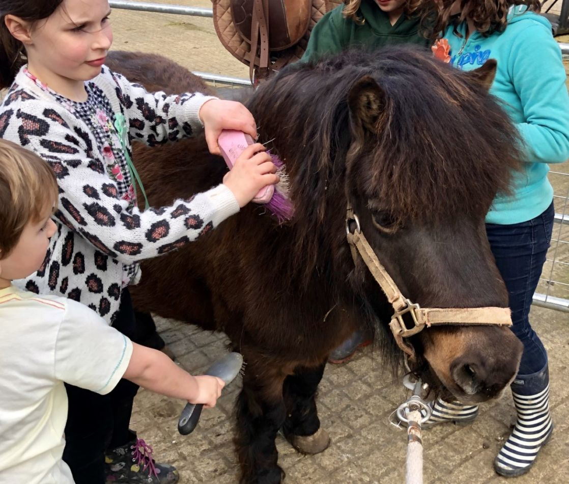 kids brushing a pony in Manor Farm