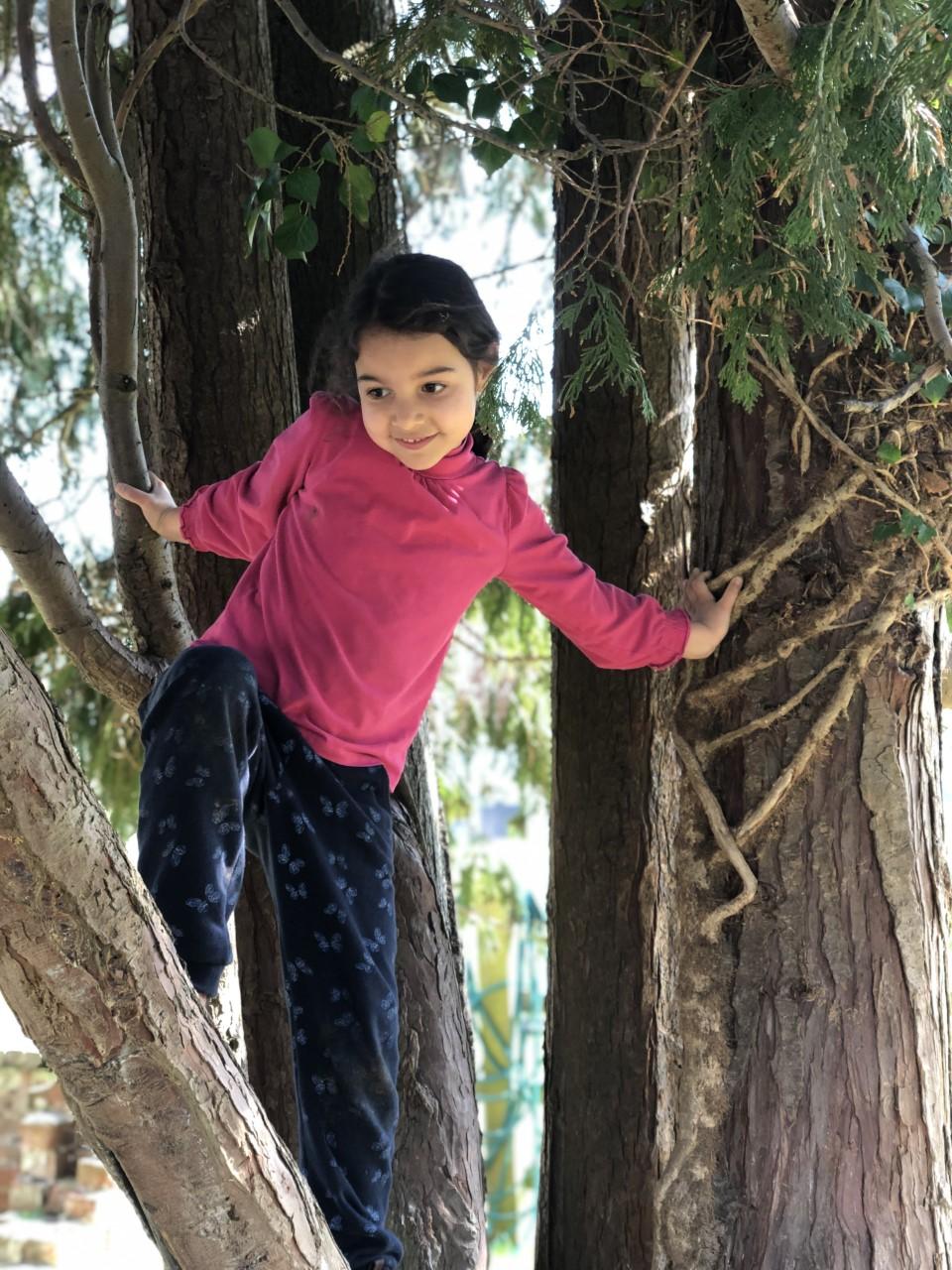 wycliffe girl climbing a tree in Manor Farm