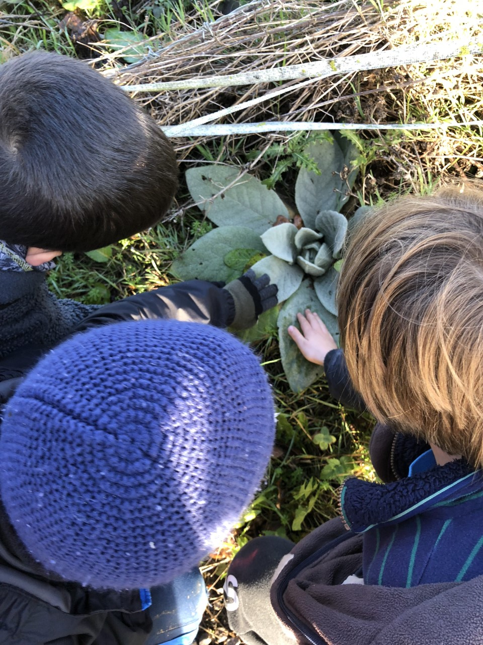 kids touching a plant