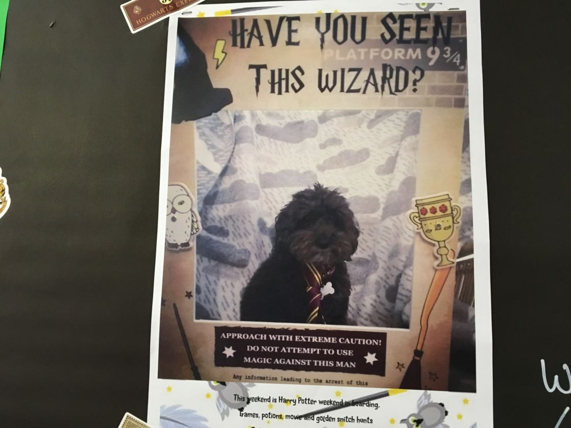have you seen this wizard poster with dog